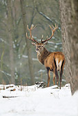 WLD 13 WF0019 01