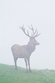 WLD 13 WF0021 01