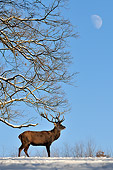 WLD 13 WF0022 01