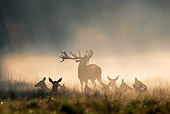 WLD 13 WF0023 01