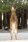 WLD 13 WF0025 01
