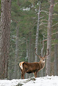 WLD 13 WF0026 01