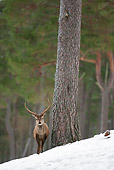 WLD 13 WF0027 01