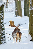 WLD 13 WF0030 01