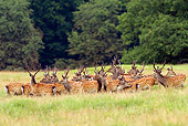 WLD 13 WF0033 01