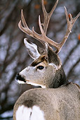WLD 13 DB0002 01