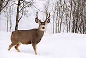 WLD 13 DB0003 01