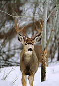 WLD 13 DB0004 01