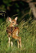 WLD 13 DB0009 01
