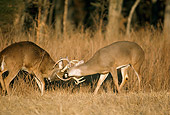 WLD 13 DB0010 01