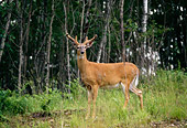 WLD 13 DB0014 01
