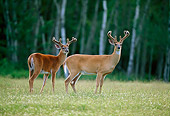 WLD 13 DB0015 01
