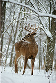 WLD 13 DB0021 01