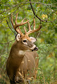 WLD 13 DB0022 01