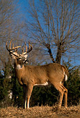 WLD 13 DB0023 01