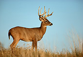 WLD 13 DB0025 01