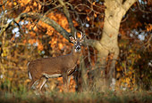 WLD 13 DB0026 01