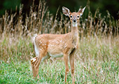 WLD 13 GR0003 01