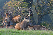 WLD 13 KH0002 01