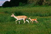 WLD 13 RK0018 08