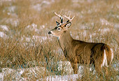 WLD 13 TK0002 01