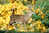 WLD 13 TK0005 01