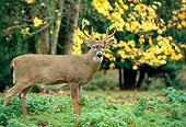 WLD 13 TK0006 01