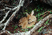 WLD 13 TK0010 01