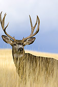 WLD 13 TL0002 01