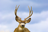 WLD 13 TL0003 01