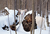 WLD 13 TL0006 01