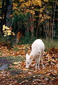 WLD 13 TL0008 01