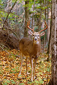 WLD 13 TL0015 01