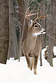 WLD 13 TL0017 01