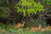 WLD 13 TL0019 01