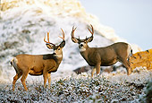 WLD 13 TL0020 01
