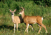 WLD 13 TL0021 01