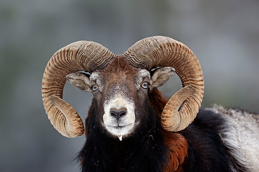 WLD 15 AC0007 01
