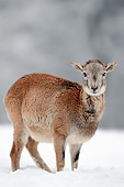WLD 15 AC0008 01