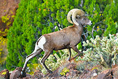 WLD 15 KH0002 01