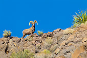 WLD 15 KH0003 01