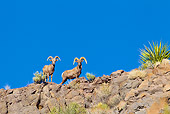WLD 15 KH0004 01