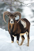 WLD 15 KH0006 01