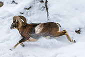 WLD 15 KH0007 01