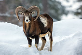 WLD 15 KH0008 01