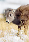 WLD 15 MC0005 01