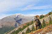 WLD 15 TL0034 01