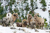 WLD 15 TL0040 01