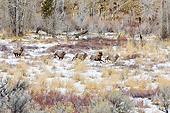 WLD 15 TL0041 01