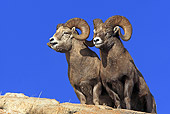 WLD 15 WF0002 01